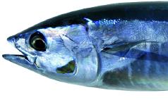 Il Pesce Azzurro Aromaweb