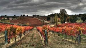 vigne e vigneti di Sagrantino, le colline di Montafalco e Bevagna